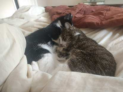 Tiger cuddling with Oreo and me only six days before Tiger passed away. She was a sweet cat all the way to the end.