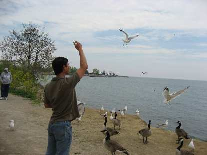 Felix Wong tossing bread to the high flyers.