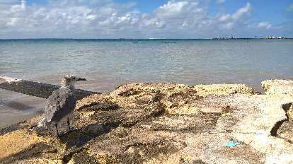 bird overlooking sea in Isla Mujeres