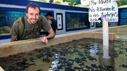 Alberto François, baby turtles, No alimente a los tortugas bebés sign