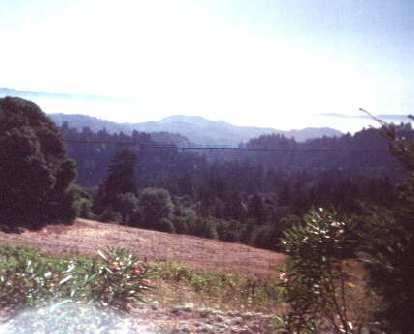 trees, mountains, 1998 Tour de Napa Valley