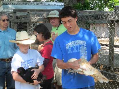 A 4H member demonstrates how to hold a chicken.