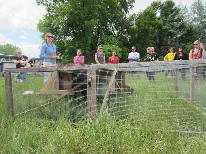 Chicken tractor: allows chickens to fertilize the ground in one spot before they are moved to a different part of the pasture.