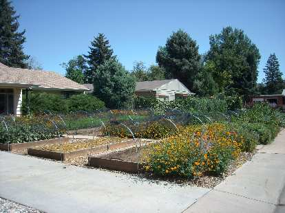 Front yard vegetable gardens.