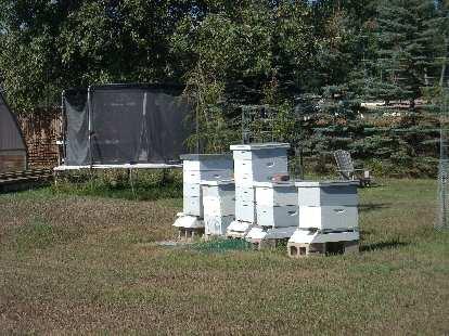 Honey bees at LaPorte Avenue Nursery.