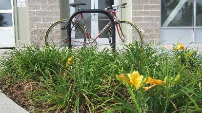Flowers in front of a Colnago.