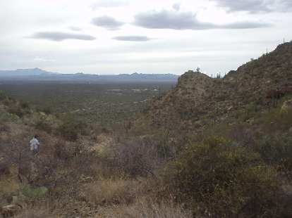 Saguaro National Park is remarkably green and lush for being in one of the driest places on earth.