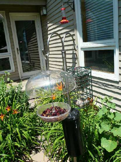 """Bird feeder with """"gourmet"""" bird food included dried cranberries."""