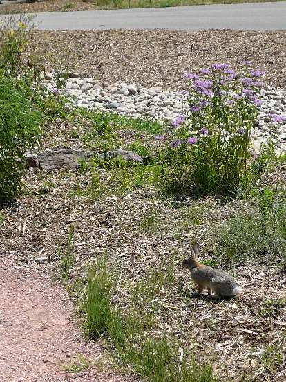 A bunny was one of the wildlife creatures stopping by.