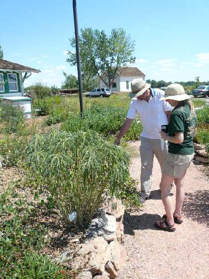 Stan and Cecilia inspect a Marsh Sunflower plant at the Nix Natural Area.