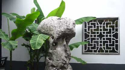 Plant, rock and window at Xue Family Garden.