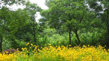 Flowers among the trees.