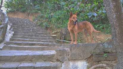 Dog by some steps in Yehliu Geopark.