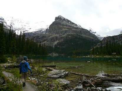 The water in Lake O'Hara was super clear.