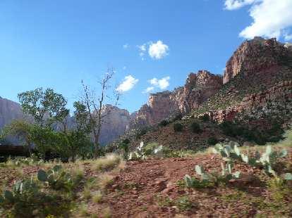 Cacti and sandstone.
