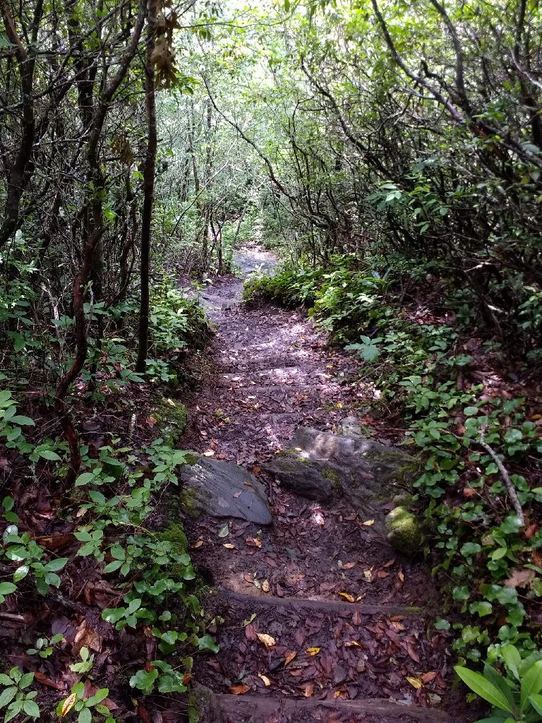 The Albert Mountain trail featured steep inclines.