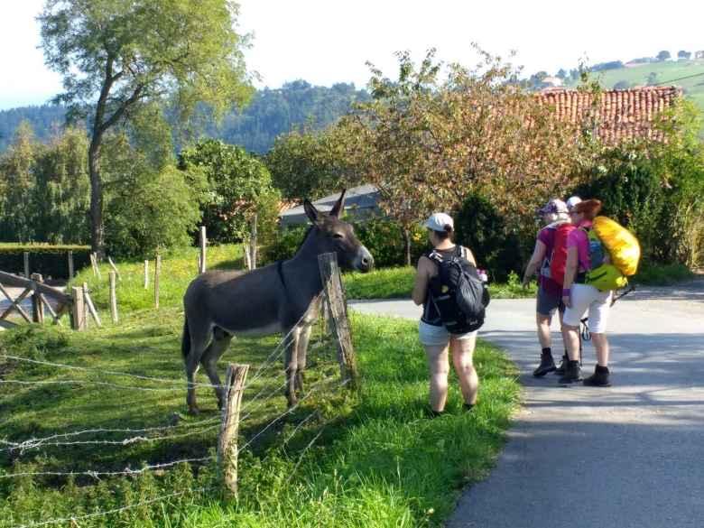 Peregrinos visiting with a donkey along the Camino del Norte near Itxaspe, Spain.