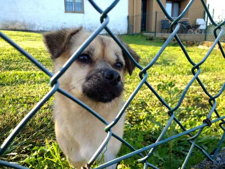Cute dog in Santa Cruz de Bezana, Spain.