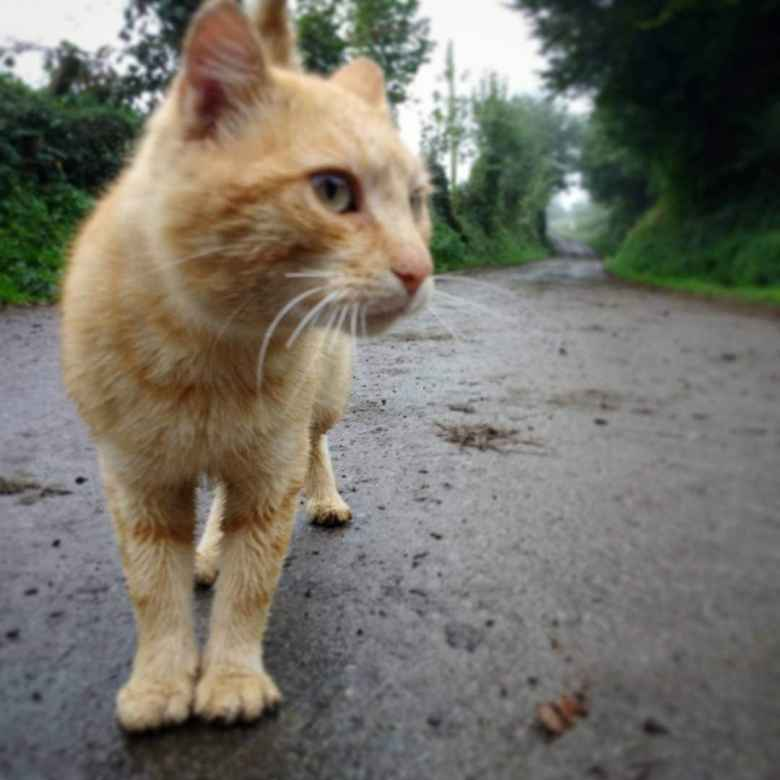 This cat on the Camino de Santiago in El Pedregal, Spain was one of the friendliest and most talkative cats I have ever met.