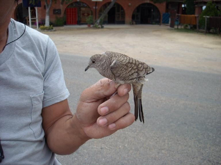 Bird perched on Yoaquin's hand as he rode his Cannondale mountain bike in Teotitlan del Valle.