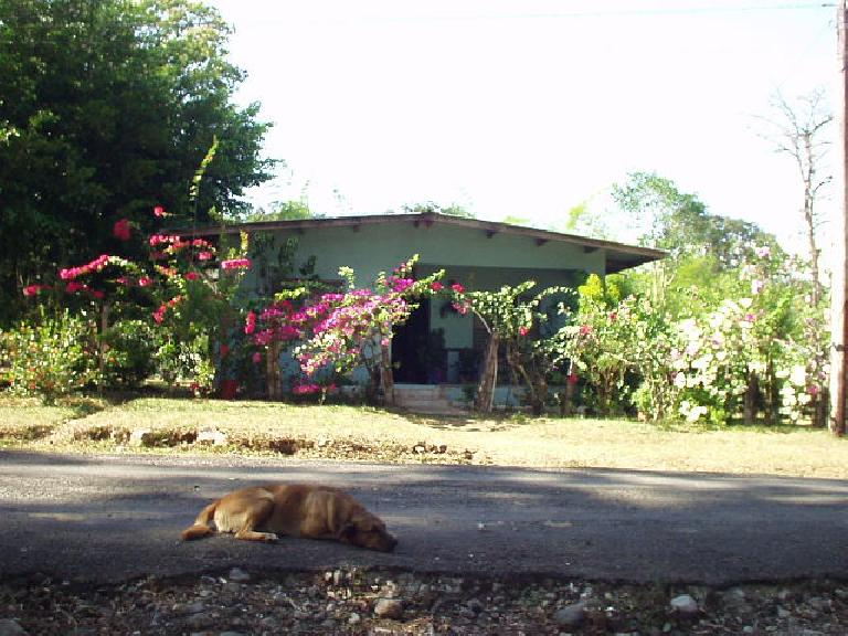 Before going horseback riding, I played (or tried to) with this lazy dog. (March 6, 2007)