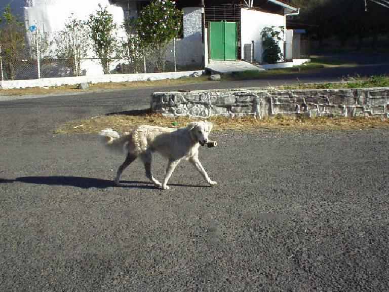 Dog carrying something resembling a pipe in his mouth. (March 9, 2007)