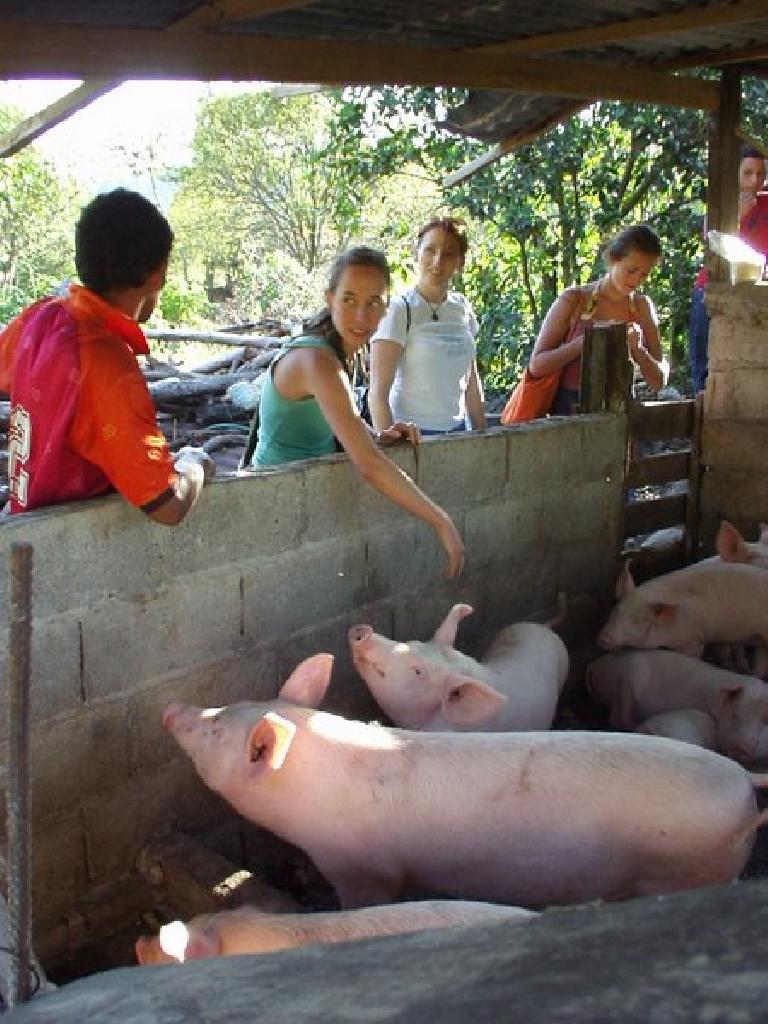 After going swimming in the Caldera River, we encountered these pigs. (March 2, 2007)