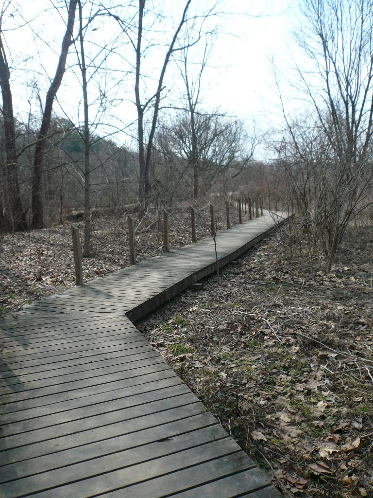 Boardwalk at the Beaver Lake Bird Sanctuary.