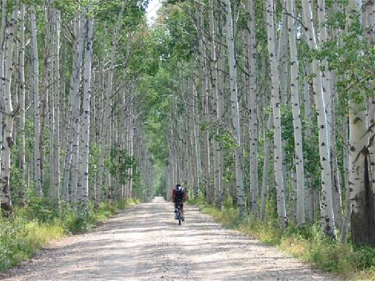 Aspen Alley in southern Wyoming.
