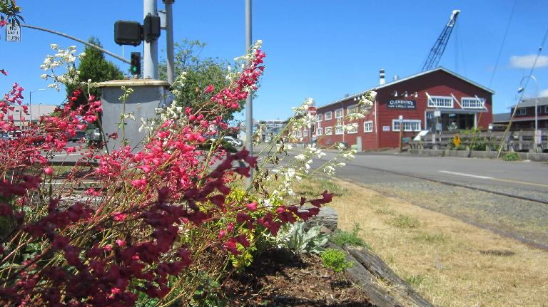 red flowers, Clemente's Cafe & Public House, Astoria, Oregon