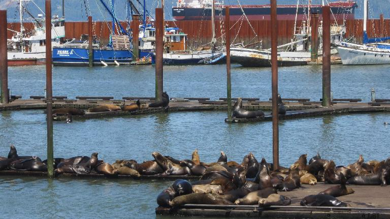 seals, boats, Columbia River, Astoria, Oregon