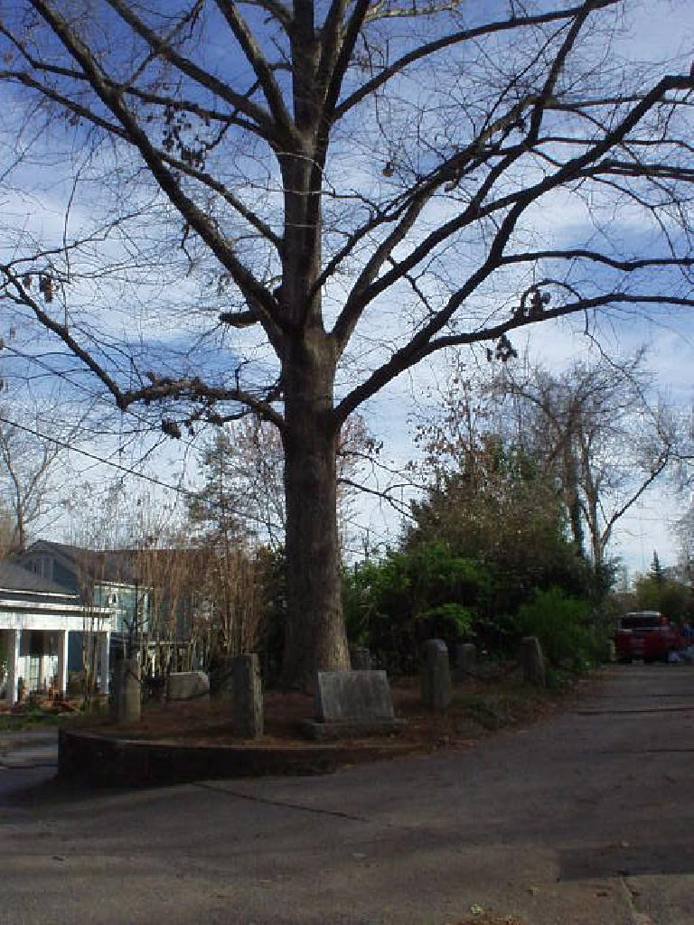 "Speaking of residences, here is ""the tree that owns itself"" (actually, its ""son"") on Finley and Deery streets.  That's right, in the early 20th century someone bequeathed some land to this tree's ""father"" since he liked it so much!"