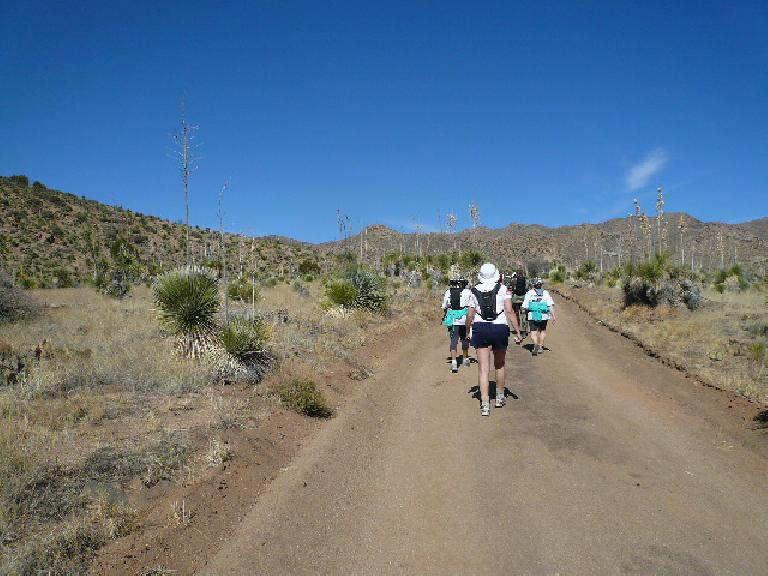 Mile 12.8: Back on sand through the yucca.