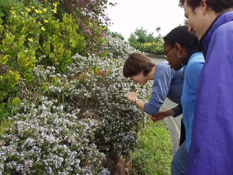 Sarah checking out the flowers with Kristina and Carlos looking on...