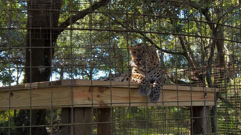 Cheetaro the leopard was born on July 19, 1998.