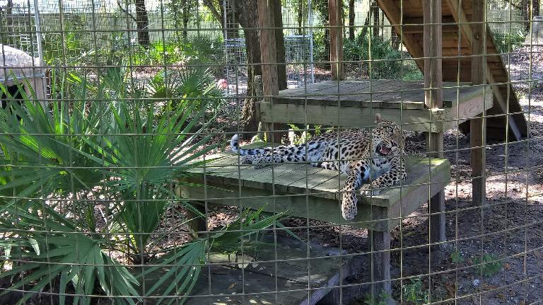 Sundari the leopard was born on November 15, 1996.