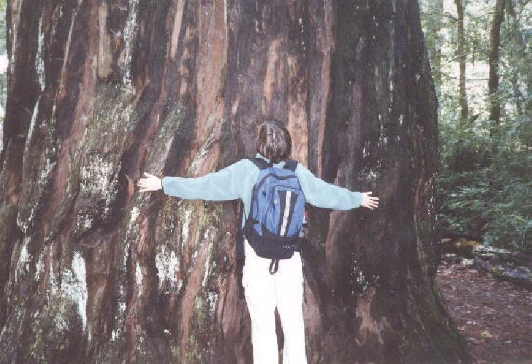 At the start of our hike to Berry Creek Falls, Sarah gives her colossal tree friend a hug.