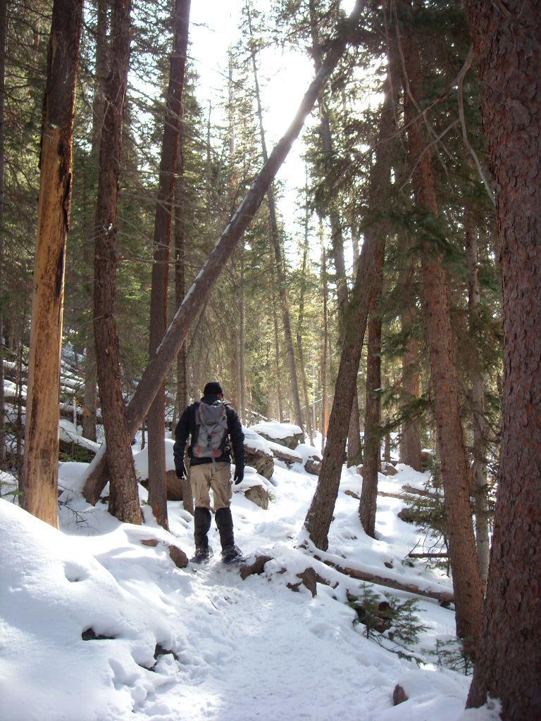 Rob through the trees.
