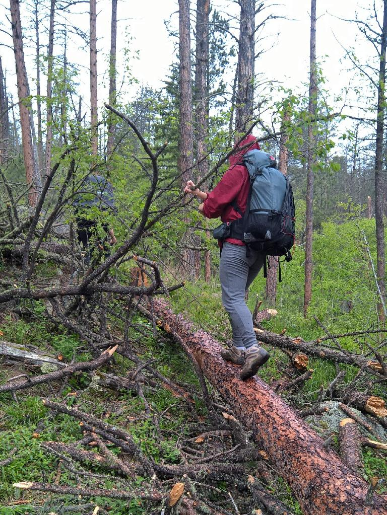 Saar walking over yet more logs on the Centennial Trail in the Black Elk Wilderness National Forest. (May 28, 2016)
