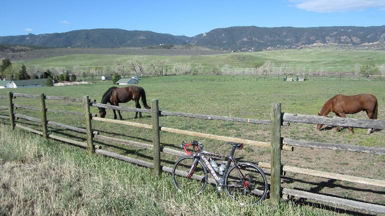 Mile ~40: Horses along the Front Range.