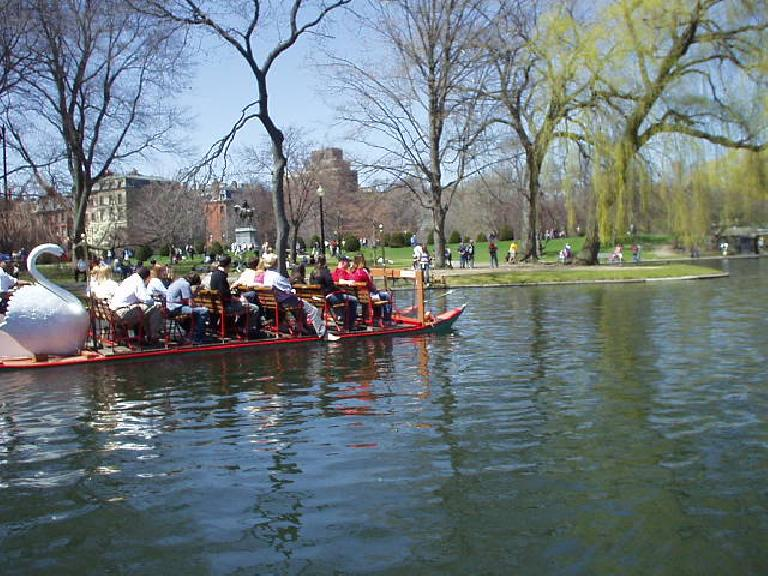 In the Public Gardens, swanboat rides were given for the first time this year...
