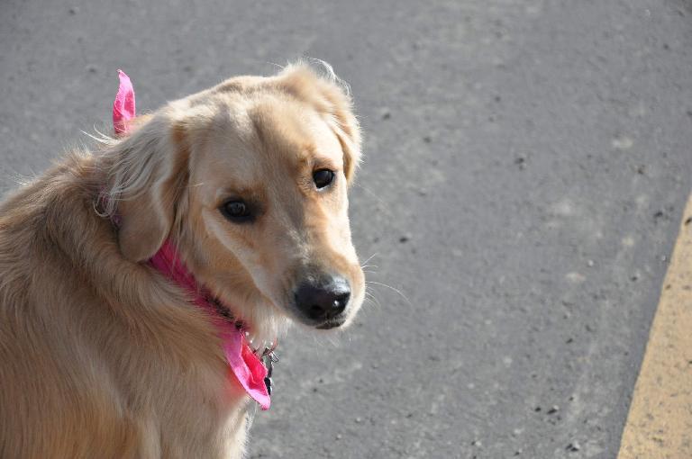 [Mile 94, 9:46 a.m.] Eddie's dog Abbey was a good pacer too. Photo: Eddie Metro.