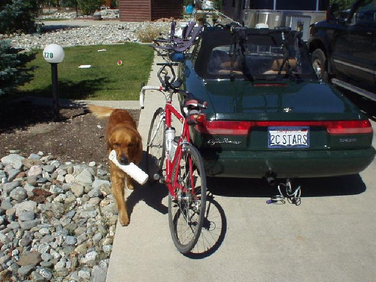 Kenzie (Mike and Angela's golden retriever) with Canny and Elaina.