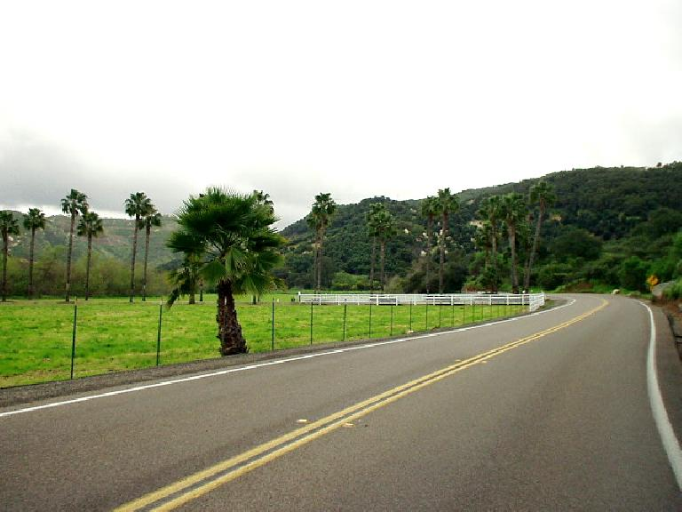 [Mile 89, 1:38 p.m.] The nice thing about all of the recent rains in Southern Califronia was how verdant the land was.  Palm trees are abundant in this landscape.