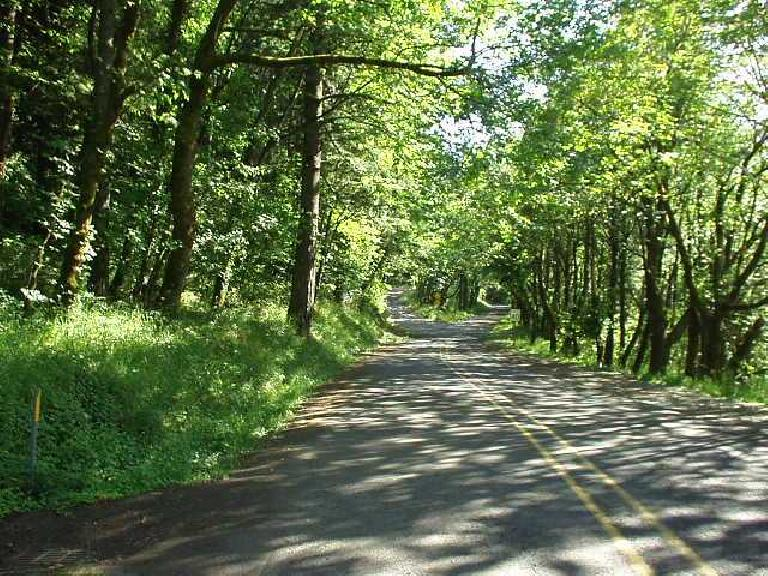 [East of Portland, OR] Along the Old Highway next to Interstate 84 were numerous state parks and hiking trails, including the Angel's Rest Trail. (June 26, 2003)