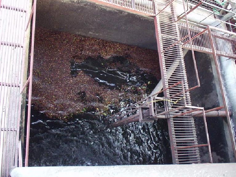 The floating process (one of the first steps).  Coffee beans that float are not as good as those that sink.