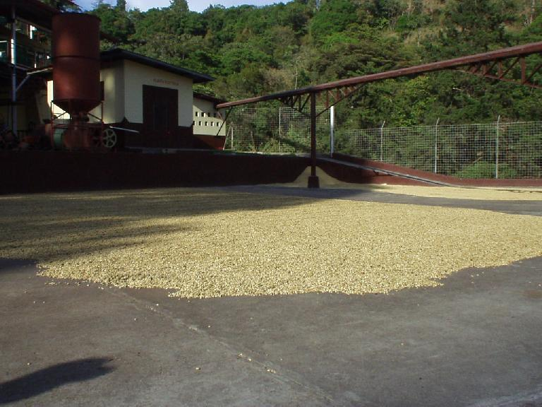 Here, coffee beans are sun-dried.  Apparently, sun-drying yields no taste advantages over stove-drying and takes longer, but uses less energy (and sounds more romantic).