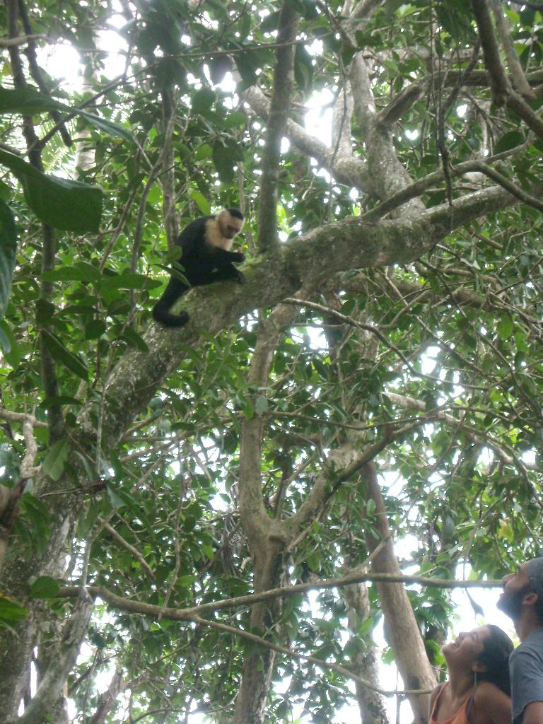 The howler monkey and some tourists.