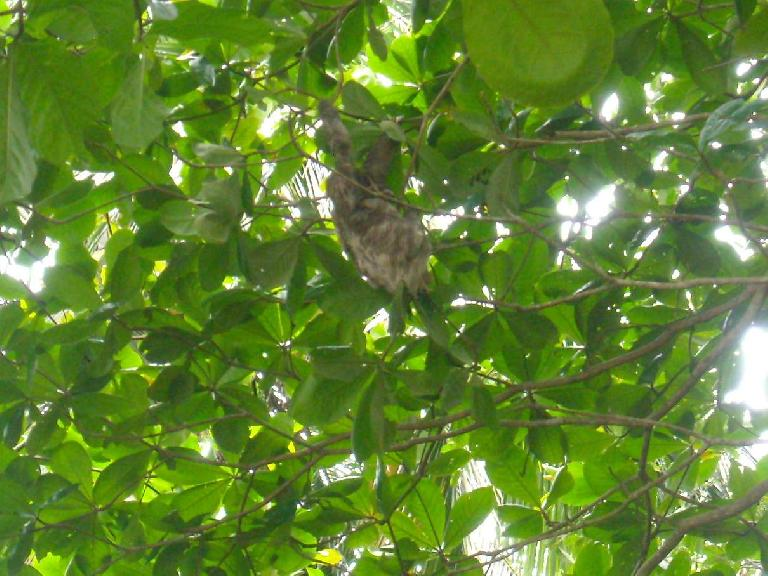 A sloth with its baby in the trees way above.  We only spotted it because other tourists were taking photos.
