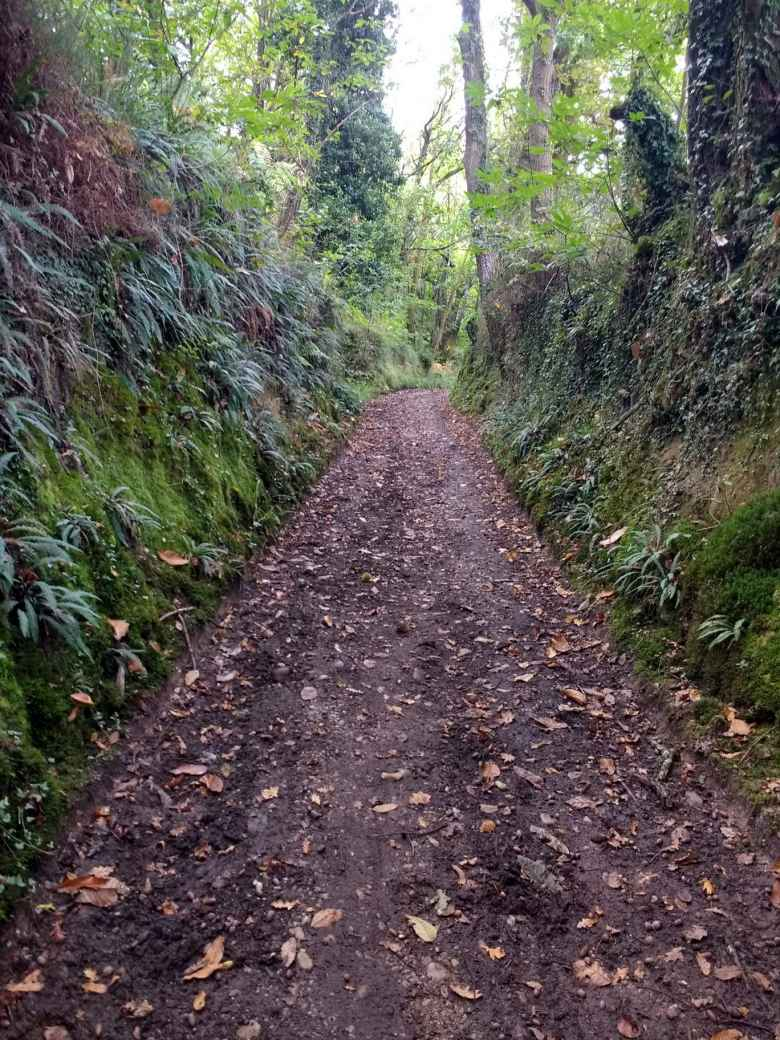 A dirt path with fallen leaves along a trail in La Bruña that connected the Camino del Norte with the Camino Primitivo.